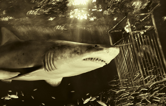 Robert Horne shark creative gallery image